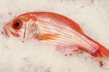 Fresh red snapper on ice for sale at a fish market