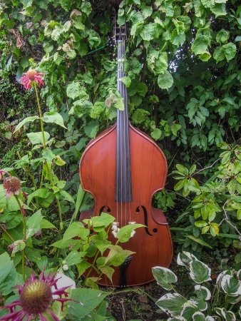 Beautiful double-bass sits among flowers in a musician s garden  Reklamní fotografie