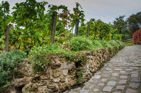 12th century: Clos Montmartre Vineyard in Paris dates back to the 12th century when monks and nuns produced wine here. Stock Photo