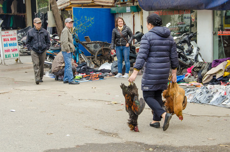 purchased: Halong Bay, Vietnam, February 12, 2015 - Woman carries two large roosters  purchased at an open market. Editorial