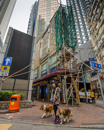 collies: Hong Kong, February 15, 2015 - Woman crossing the street with her two Collie dogs. The scaffolding on the building behind her is made from bamboo.