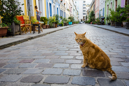 rue: Paris, France, August 4, 2015 - Resident tabby cat sits in the middle of Rue Cremieux, in the 12th Arrondissement, one of the prettiest residential streets in the city.