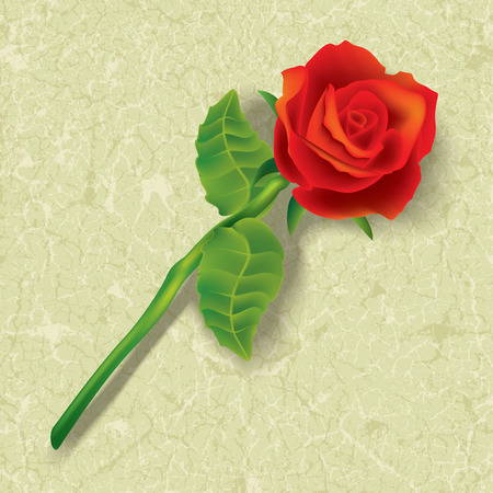 abstract floral illustration with red rose on cracked beige background Stock Vector - 8984203