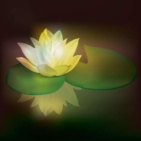 white lotus flower: abstract floral illustration with lotus on dark Illustration