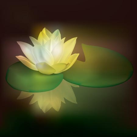 lirio acuatico: Ilustraci�n floral abstracto con lotus en la oscuridad
