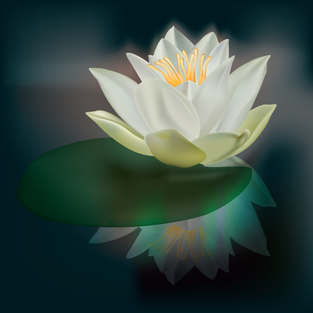 water lily: abstract floral illustration with white lotus on dark Illustration