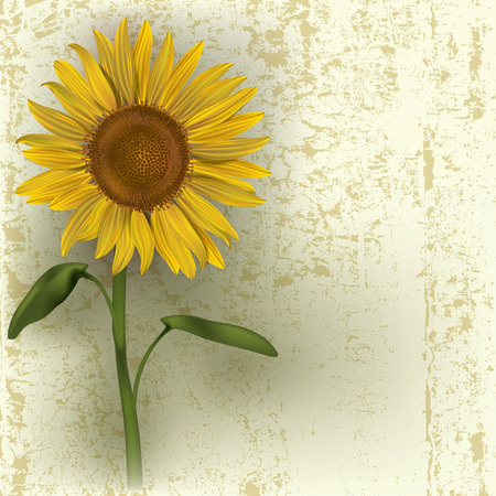 grunge floral illustration with sunflower on beige