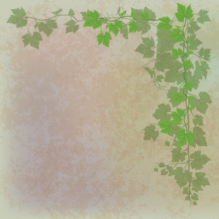 grunge illustration with grape leaves on grey Stock Vector - 9178554