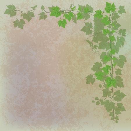 grape leaves: grunge illustration with grape leaves on grey Illustration