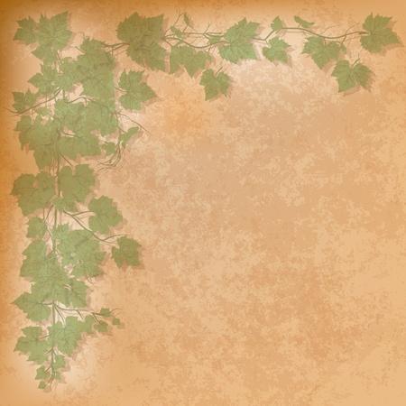 grape leaves: grunge illustration with grape leaves on orange
