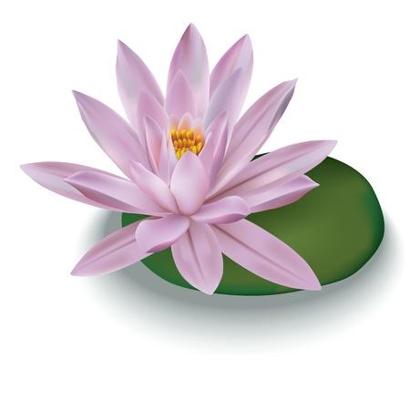 lotus Rose isolé sur un fond blanc Illustration