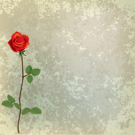 abstract grunge floral background with red rose on grey Vector