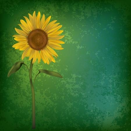 cuadro abstracto: fondo floral abstracta grunge con girasol en verde