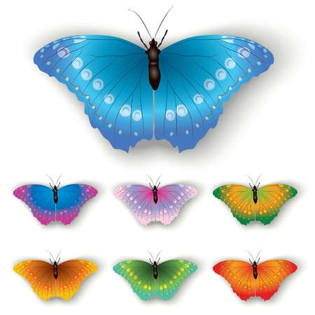 color butterflies isolated on a white background Stock Vector - 9817701