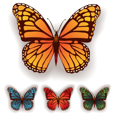 color butterfly isolated on a white background Stock Vector - 9817699