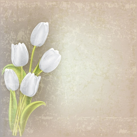 abstract floral grunge background with white tulips Çizim