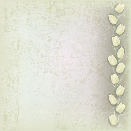 abstract grunge grey background with white tulips Vector