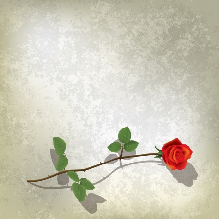 abstract grunge gray background with red rose Vector