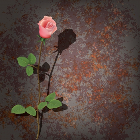 metall: abstract background with rose and rusty metall plate