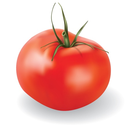photorealistic: red vector tomato isolated on white background
