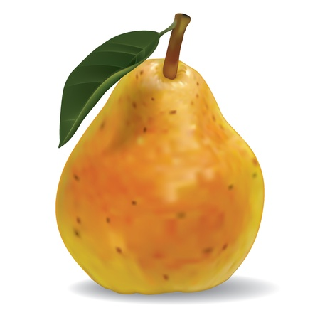 photorealistic: vector pear isolated on a white background Illustration
