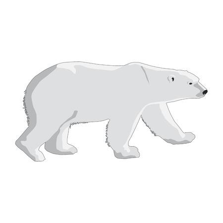 polar bear isolated on a white background Illustration