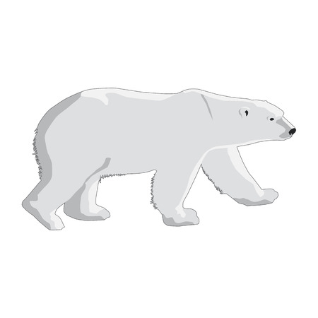 polar bear isolated on a white background Çizim
