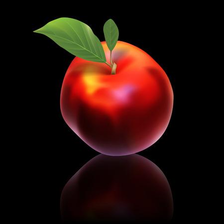 nectarine: red vector nectarine isolated on black background
