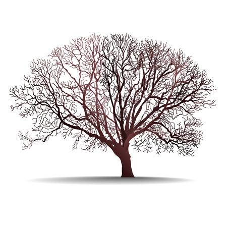 leafless tree isolated vector illustration on white background Illustration