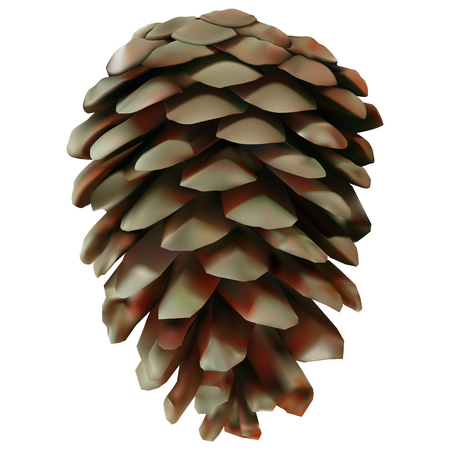 Pine cone illustration.