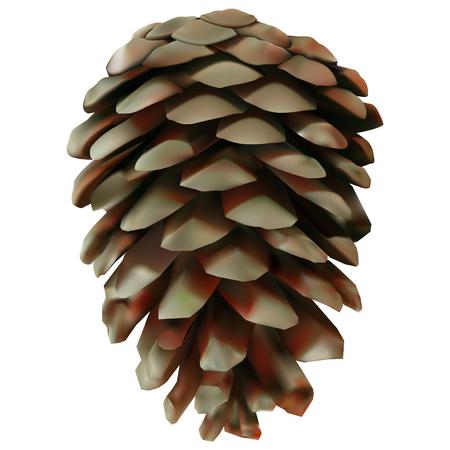 Pine cone illustration. Ilustração Vetorial