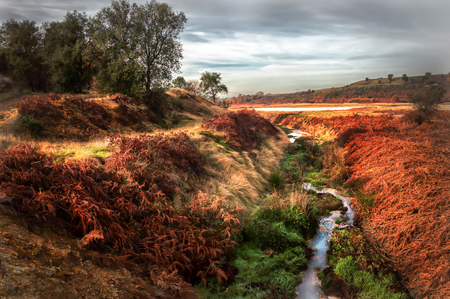 Small stream between colored fields Imagens