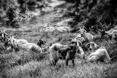 Goats resting under the trees Imagens