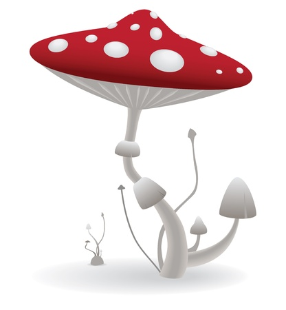Vector illustration of a poisonous mushroom on the isolated white background Vector