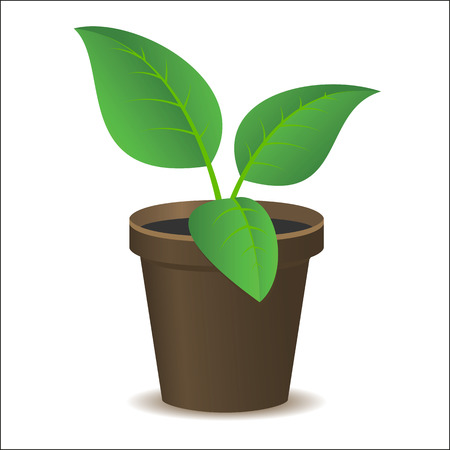 flowerpot: green vector plant in a flowerpot on a white background Illustration