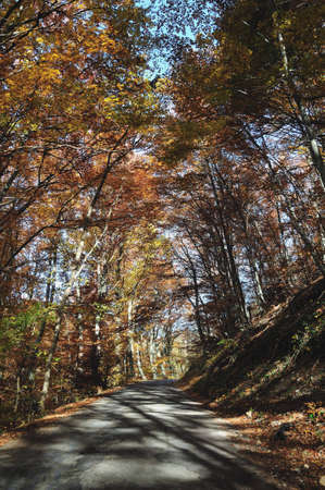 forest path in the autumn light Stock Photo - 5838863