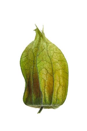 Physalis fruits sur fond blanc