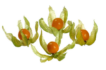 a group of physalis fruits