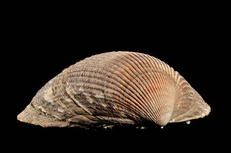sea shell on a black background