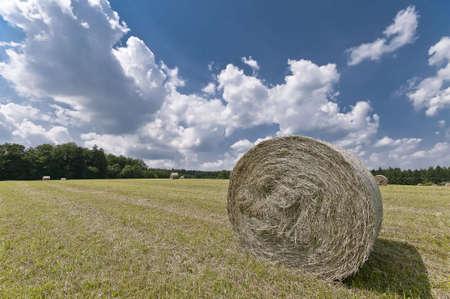 farmers field with hay bales Stock Photo - 8136329