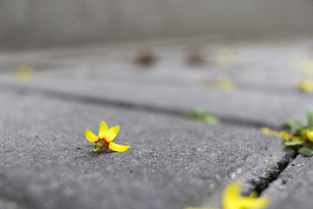 min: Close up to fallen deciduous flower on the floor