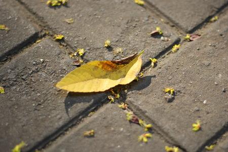 min: Fallen leaf on the floor
