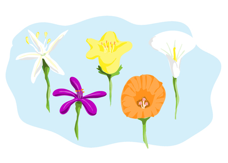 buttercup: Flowers, a hand drawn vector illustration of flowers, all flowers and the background are on their separate groups for easy editing.