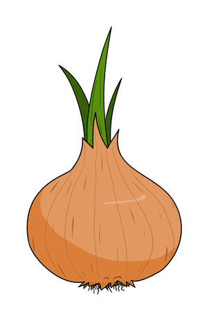onion isolated: Onion, a hand drawn vector illustration of a fresh onion, isolated on a white background editable. Illustration