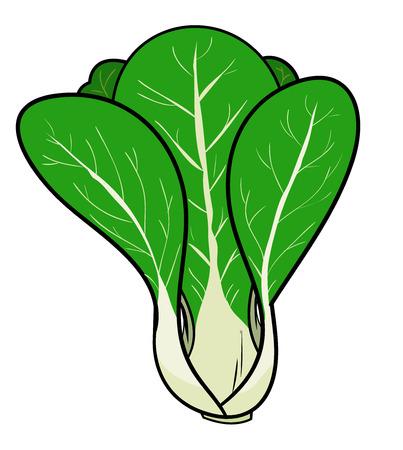 cabbage: Pak ChoiBok Chay china Col, un ejemplo del vector dibujado a mano de un pak choi fresca también conocido como col china, aislado en un fondo blanco editable.