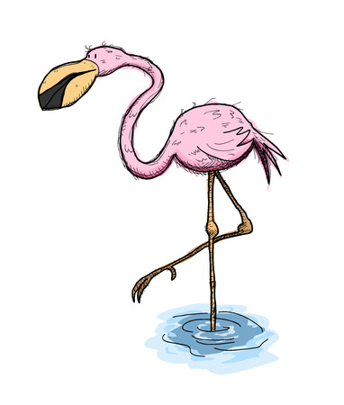 flamenco ave: Flamingo, a hand drawn vector illustration of a cute flamingo bird standing on one foot on the water. Vectores