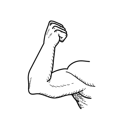 Bicep, a hand drawn vector doodle illustration of a big strong bicep of a bodybuilder.
