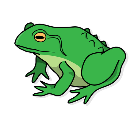 Frog, a hand drawn vector illustration of a frog with shadow backdrop. Illustration