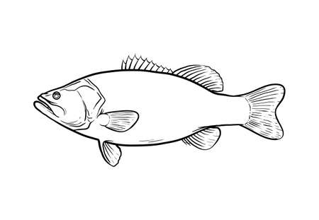 Largemouth bass doodle, hand drawn vector illustration of a largemouth bass game fish in black and white, isolated in white background.