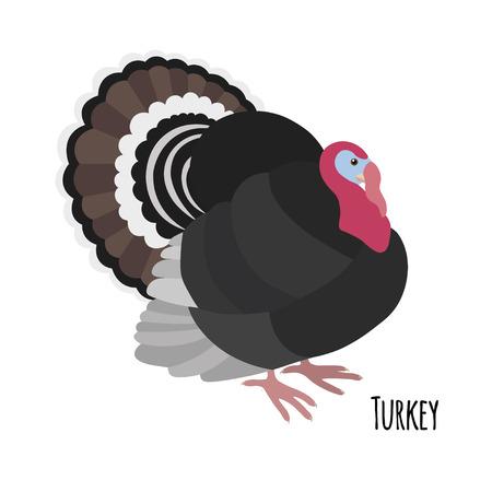 strut: Cartoon turkey isolated on white background, vector illustration Illustration